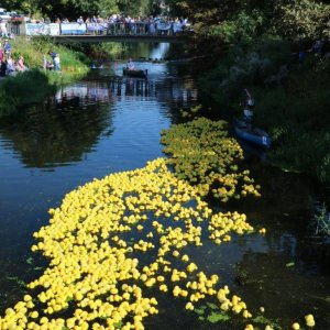 The Deepings Lions Duck Race to go ahead online